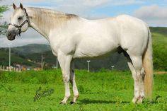 Gold Streakin' VM Appaloosa, Quarter Horses, Painting, Grey Horses, Animals, Gold, Pretty Horses, Animales, Animaux