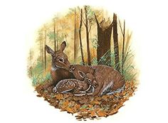 """1366 Deer in Forest Waterslide Ceramic Decals By The Sheet (B 9 1/4"""" dia * 2 pcs) * Click image to review more details."""