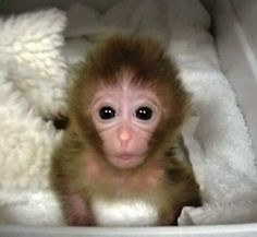 RRR: Real Ridiculous Research - IDA's Top 10 list of Ridiculous Research is out! Labs Being Stressful Places for Monkeys, Rats Finding Miles Davis Is Better with Cocaine Are Just the Tip of the Iceberg!