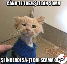 Funny Relatable Memes, Funny Texts, Gravity Falls Comics, Internet, Geek Stuff, Jokes, Lol, Humor, Cats