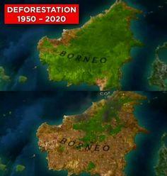 Palm oil= orangutan genocide and deforestation