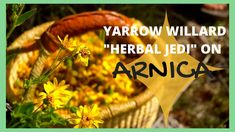 Join Herbalist Yarrow Willard in connecting with Arnica, a sub-alpine mountain flower with powerful healing properties. In this video he shares how to identify, harvest, process, make medicine and many of the health benefits this plant has to share