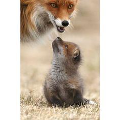 """1 место в категории """"Млекопитающие"""". Фото Gabi Marklein"""