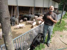 Entusiastic Ernst Organic, Dogs, Animals, Animales, Animaux, Pet Dogs, Doggies, Animal, Animais
