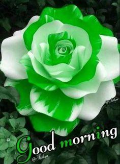 Beautiful Love Pictures, Beautiful Birds, Good Morning Flowers Rose, Good Morning Coffee, Night Wishes, Good Morning Greetings, Good Morning Images, Lehenga Choli, English