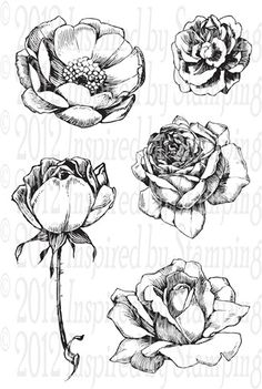 Flowers sketches