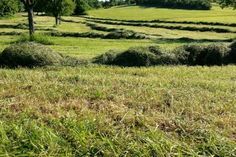 2013-06-08: the smell of cut grass