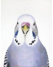 """Cyril"" Budgie Art Print by Margaret Petchell NZ Art Prints, Art Framing Design Prints, Posters & NZ Design Gifts Art Prints For Sale, Fine Art Prints, Sparrow Art, Animal Art Prints, New Zealand Art, Nz Art, Budgies, Artist Painting, Bird Art"