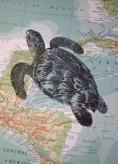 Sea turtle print on vintage map, by CrowBiz