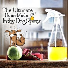 Itchy dog - TRY THIS RECIPE FOR SOME RELIEF! Itchy now or itchy this spring, with the help of Dr Karen Becker, this new & improved yeast smashing, antiitch homemade spray for dogs … Anti Itch For Dogs, Dog Anti Itch Spray, Dog Itchy Skin Remedy, Essential Oils Dogs, Oils For Dogs, Dog Itching, Dog Shampoo, The Help, Diys