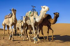 Travelling in Morocco