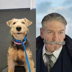 Is there going to be an Orient Express sequel? We nominate Sailor to be the star.