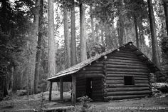 Cabin in the woods at Sequoia National Park