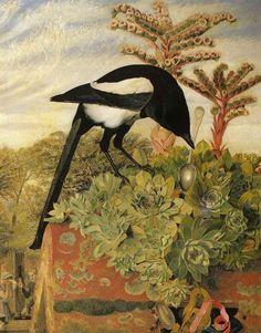 Magpie and succulent and a silver spoon.  What a dream.