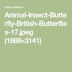 Animal-Insect-Butterfly-British-Butterflies-17.jpeg (1869×3141)