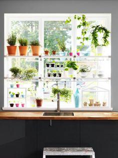 Kitchen - herbs on the window sill