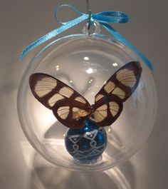 """Thyridia themisto""  from Peru                 Clear wing family 80mm clear ornament $15.00 US Butterfly Ornaments, Clear Ornaments, Peru, Christmas Bulbs, Wings, Holiday Decor, Crafts, Turkey, Manualidades"
