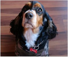 Bella - Linda e super protegida com sua placa pet personalizada!!!!