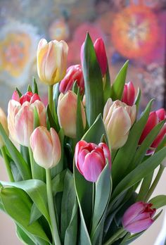 Tulips in bloom. Tulips Flowers, Daffodils, Spring Flowers, Planting Flowers, Beautiful Flowers, Pink Tulips, Easter Flowers, Flowers Garden, Bloom