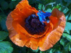 #Flower #Blumen