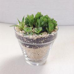 """Glass pot  #succulents #succulentlove #succulentaddict #succulove #pottedsucculent #suckerforsucculents #succulents_only #succulentjunkie #tagsforlikes…"""