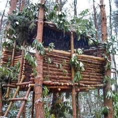Top bushcraft tips that all survival lovers will certainly desire to master now. This is basics for bushcraft survival and will definitely defend your life.