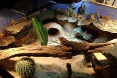 desert terrarium decor - Google Search