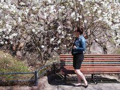 Kuistin kautta: Valkoinen magnolia kukkii