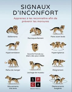Signaux d'inconfort - Chien - SPCA Montréal Dog Body Language, Chiwawa, Dog Facts, Pet Life, Jack Russell Terrier, Baby Dogs, Cute Animals, Puppies, Pets