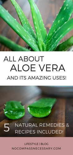 5 All Natural Aloe Vera Remedies & Recipes! All about Aloe Vera its uses and benefits for skincare acne shampoo hair juice and the digestive system. - March 10 2019 at Natural Home Remedies, Natural Healing, Herbal Remedies, Health Remedies, Holistic Healing, Natural Oil, Cold Remedies, Holistic Remedies, Hair Remedies