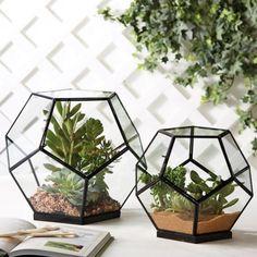 Chic minimal terrariums