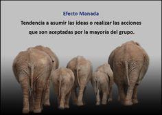 Efecto Manada / Artículo completo: http://sharingideas-josecavd.blogspot.com.es/2014/06/efecto-manada-sesgos-cognitivos-atajos.html