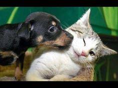 Perros y gatitos jugando, lo más tierno del mundo