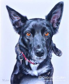"""DOG PORTRAIT Annie - Kelpie x Border Collie Acrylic on canvas x x Private Commission: Jan (East Melbourne, VIC) Annie - Kelpie x Border Collie """"Annie is a loving and friendly dog who is part of the extended family. Collie Dog, Border Collie, Extended Family, Wildlife Art, Dog Portraits, My Animal, Beautiful Artwork, Lovely Things, Dog Friends"""