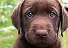 World's Most Expensive Dog Breeds, no 10 is awesome