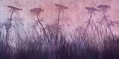 Purple Grass Silhouette -             Wall Mural & Photo Wallpaper -           Photowall
