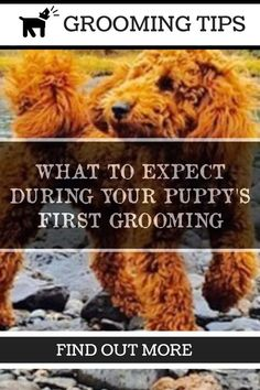 Dog Grooming Tips That Save You Money - Article 237 *** For more information, visit image link. Dog Grooming Tips, Dog Grooming Business, Dog Wash, Dogs And Puppies, Your Pet, Money, Simple, Image Link, Silver
