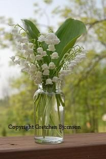 Love for lilly of the valley
