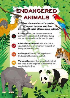 Endangered Animals Classification Poster   Teaching Resources - Teach Starter