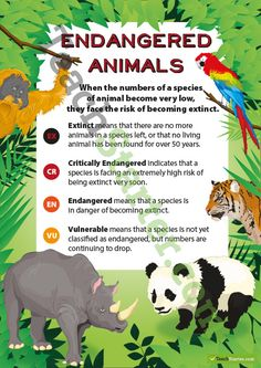 Endangered Animals Classification Poster | Teaching Resources - Teach Starter