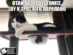 15 Funny Photos That Prove Cats Can And Will Fit Anywhere Funny Cat Photos, Funny Cat Videos, Cute Cats, Funny Cats, Caber, Kinds Of Cats, Animal Rescue Site, Cat Boarding, Cat Memes