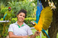 Bird's Show Puerto Vallarta, During The Summer, Riviera Maya, Summer 2016, Resorts, Vacation Resorts, Vacation Places