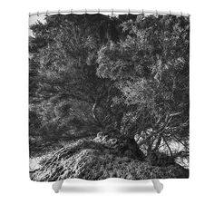 On The Rocks Shower Curtain by Cesare Bargiggia