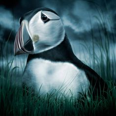 Puffin by Moonlight