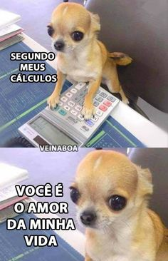 Best memes engraados em portugues ideas Beste lustige Meme in portugiesischen Ideen Memes Humor, 100 Memes, Best Memes, Funny Memes, Funniest Quotes, Hilarious Jokes, Animal Jokes, Funny Animals, Michaela