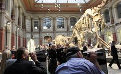 Interactive installations: Natural History Museum, Berlin, 2007
