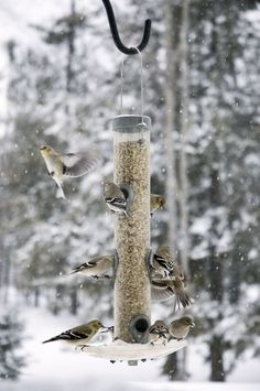Geef vogels een geweldige winter!