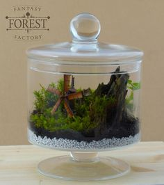 Terrarium with windmill