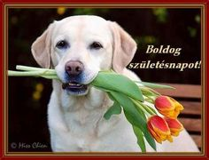 Labrador Retriever, Happy Birthday, Dogs, Animals, Dog, Birth, Flowers, Labrador Retrievers, Happy Brithday