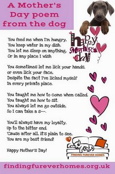 Happy mothers day lots of love from buddy and lewi I Love Dogs, Puppy Love, Cute Dogs, Mothers Day Poems, Happy Mothers Day, Mothers Day From Dog, Daughter Poems, Dog Quotes, Animal Sayings